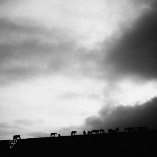 Horse Hill. Black and white photographic prints, Richard Pengelley, The Shy Photographer