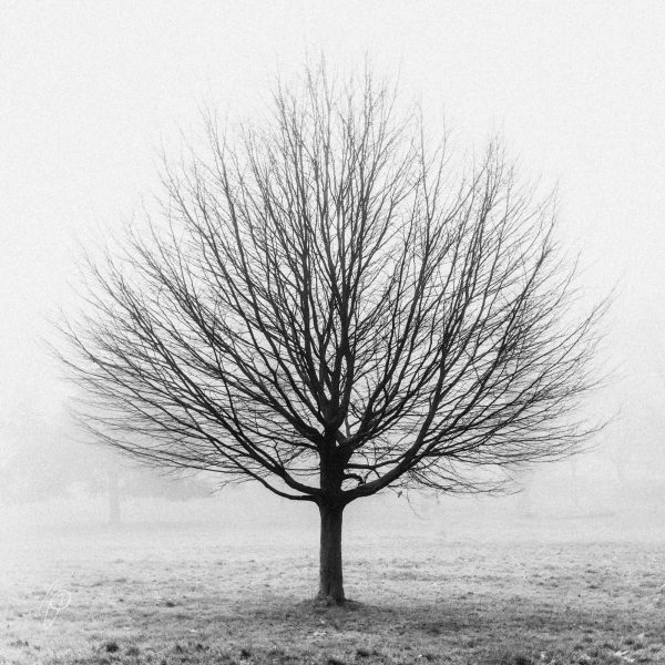The Last Leaf. Black and white photographic prints, Richard Pengelley, The Shy Photographer