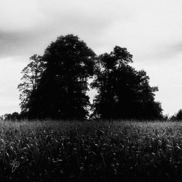 Tree Creatures. Black and white photographic prints, Richard Pengelley, The Shy Photographer